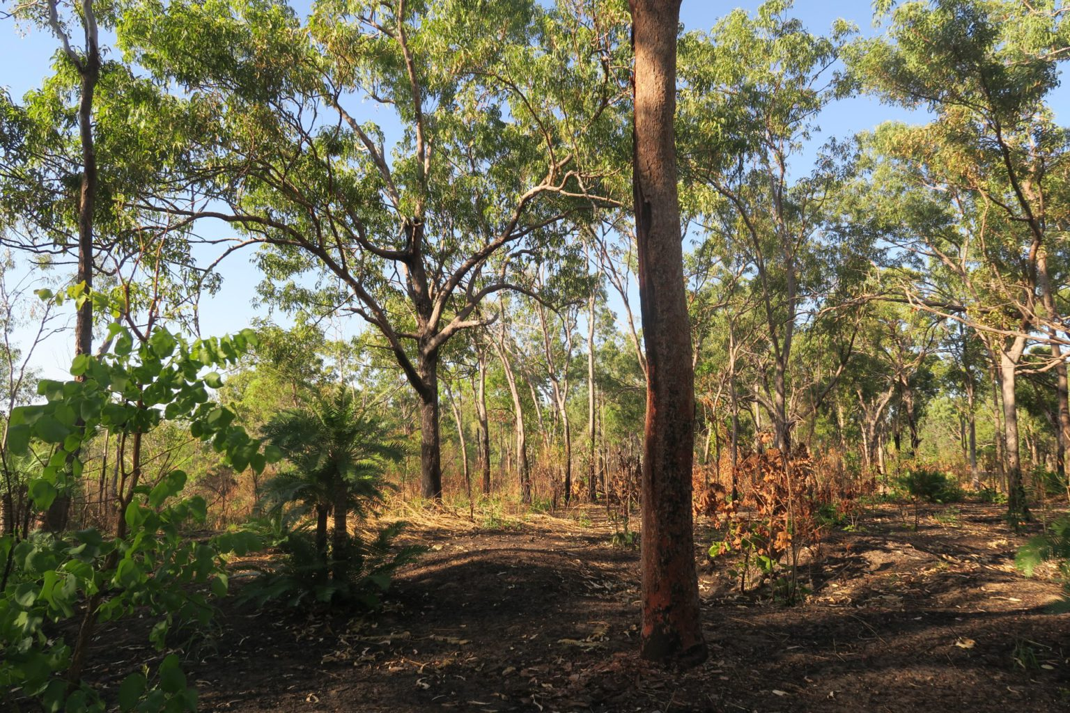 Lee Point open eucalypt forest